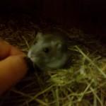 Mein Hamster Gustl, da war er noch sehr schüchtern