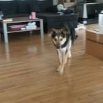 Die schüchterne Melody, ein Pflegehund aus dem Auslandstierschutz