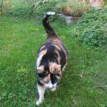 Kätzin Else in ihrem Garten